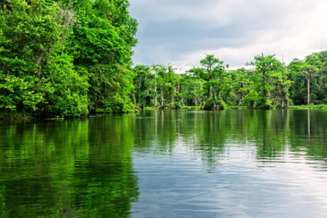 Wakulla Springs State Park is home of one of the largest and deepest freshwater springs in the world.  Tour the river to see nature in the their natural habitat.